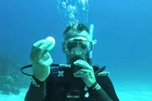 شاهد بالفيديو تجربة كسر البيضة داخل الماء .. سبحان الله