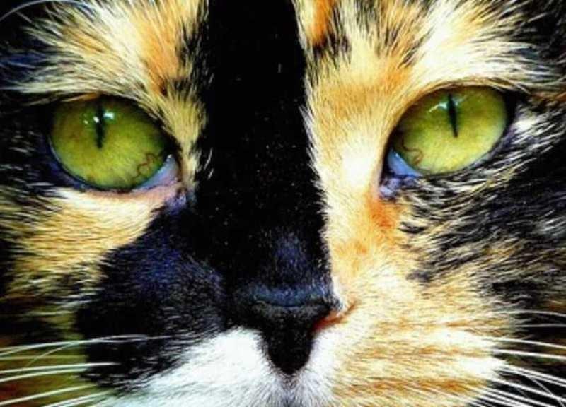 beautiful cats صور قطط جميلة (11)