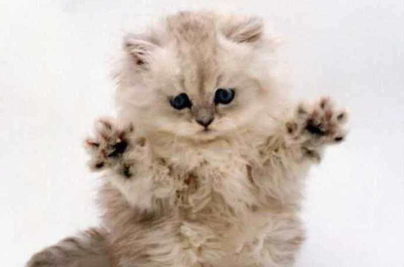 beautiful cats صور قطط جميلة (14)