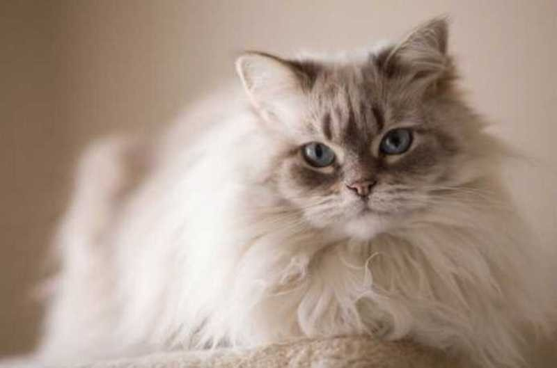 beautiful cats صور قطط جميلة (15)