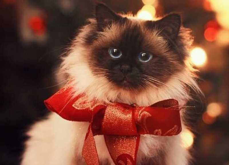 beautiful cats صور قطط جميلة (16)