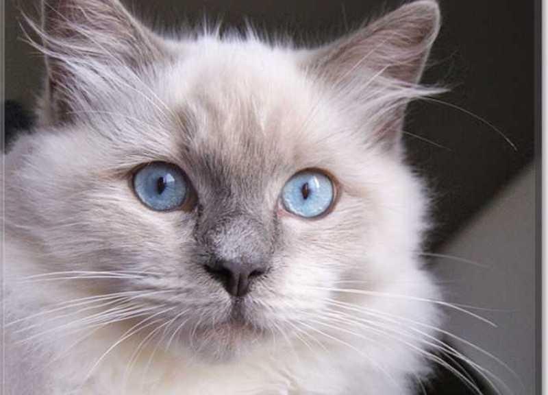 beautiful cats صور قطط جميلة (17)