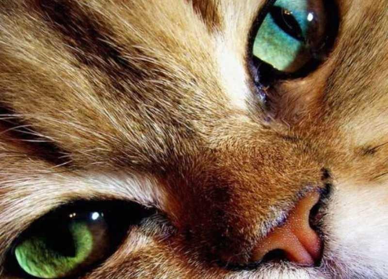 beautiful cats صور قطط جميلة (19)