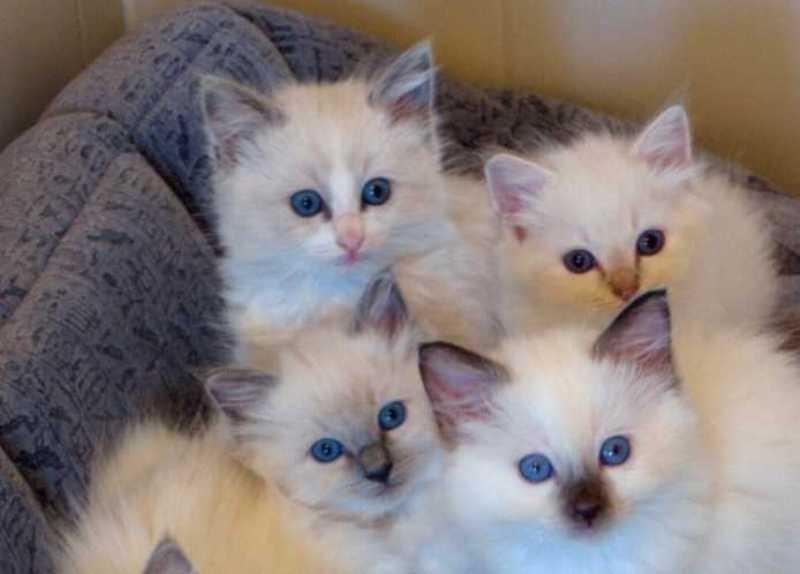 beautiful cats صور قطط جميلة (20)