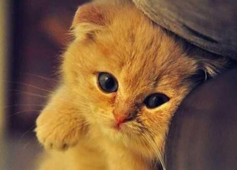 beautiful cats صور قطط جميلة (22)