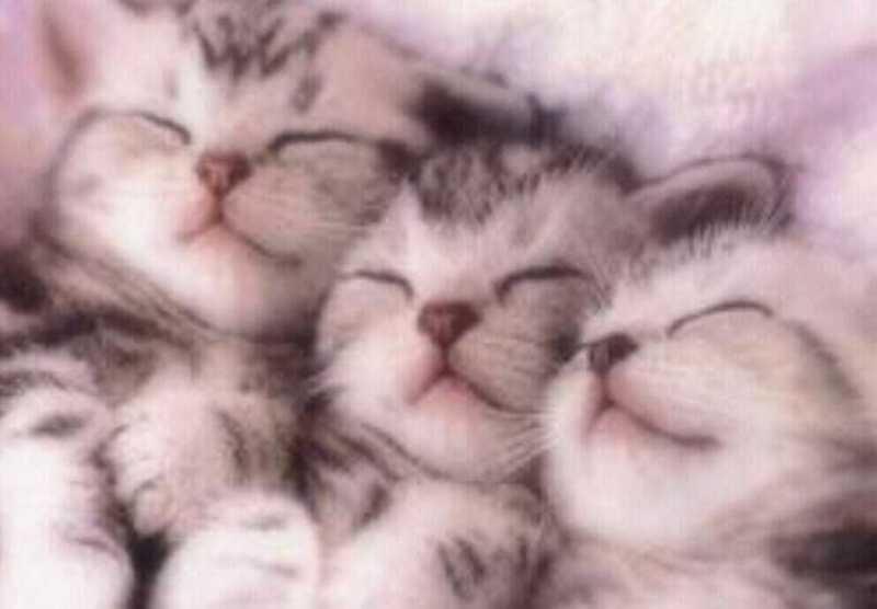 beautiful cats صور قطط جميلة (24)