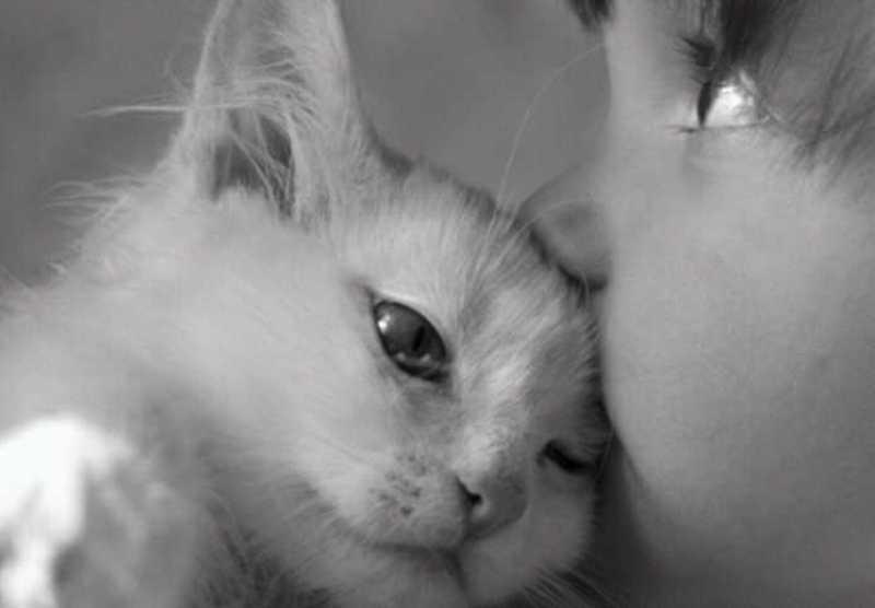beautiful cats صور قطط جميلة (25)