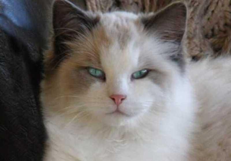 beautiful cats صور قطط جميلة (26)