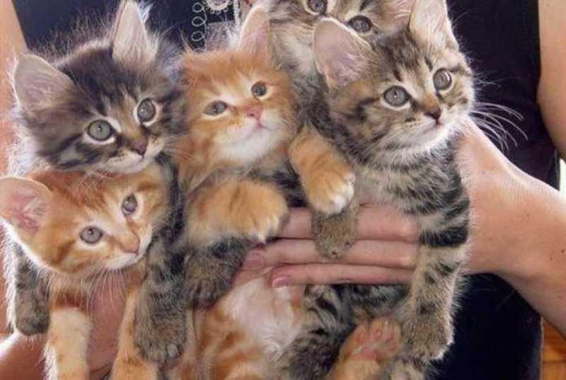 beautiful cats صور قطط جميلة (27)