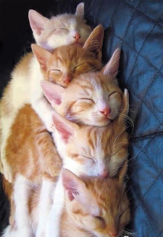 beautiful cats صور قطط جميلة (28)