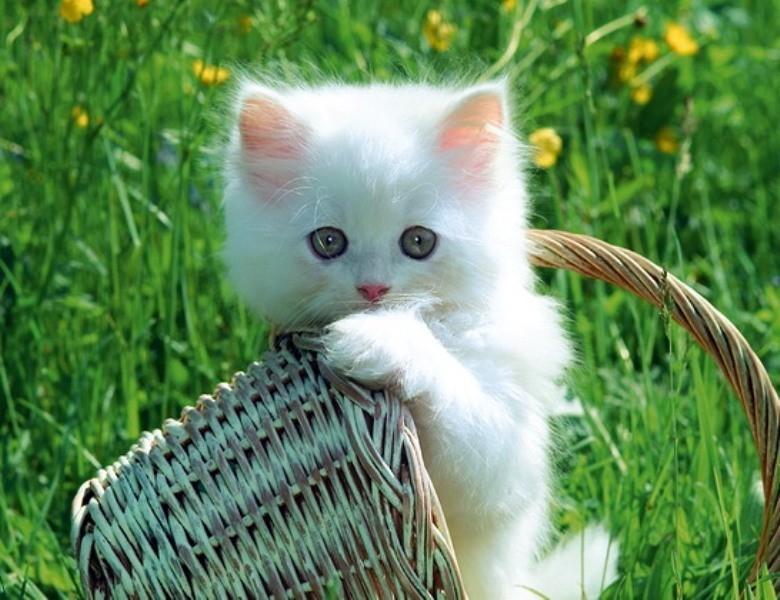 beautiful cats صور قطط جميلة (3)