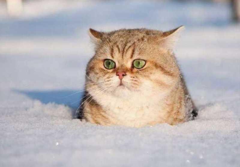 beautiful cats صور قطط جميلة (32)