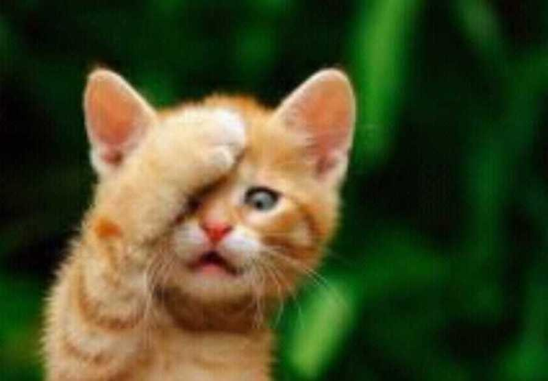 beautiful cats صور قطط جميلة (33)