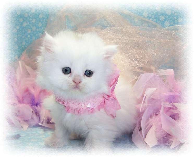 beautiful cats صور قطط جميلة (34)