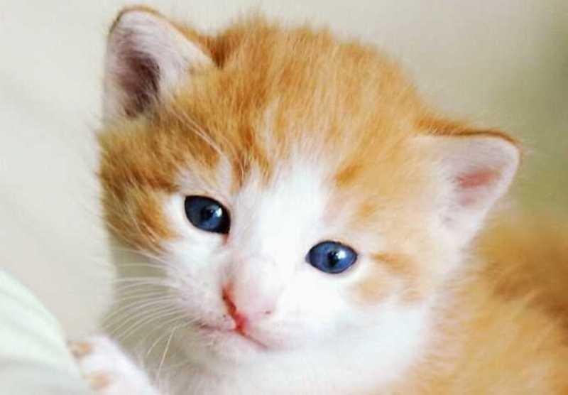 beautiful cats صور قطط جميلة (4)