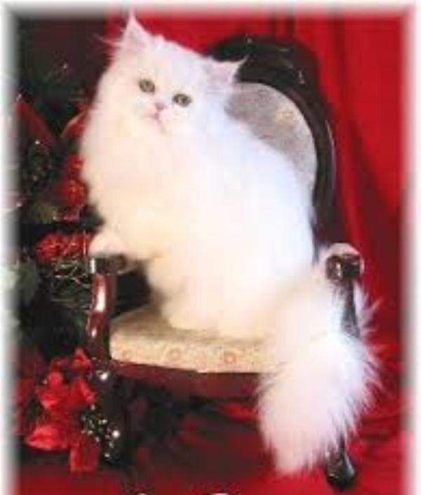 beautiful cats صور قطط جميلة (40)