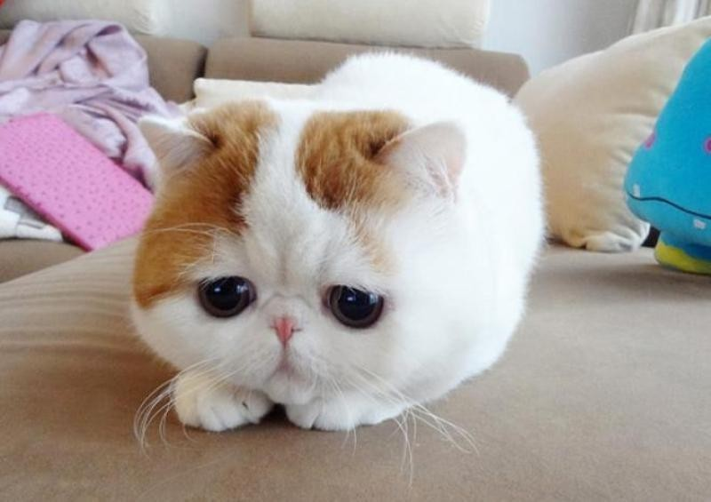 beautiful cats صور قطط جميلة (41)