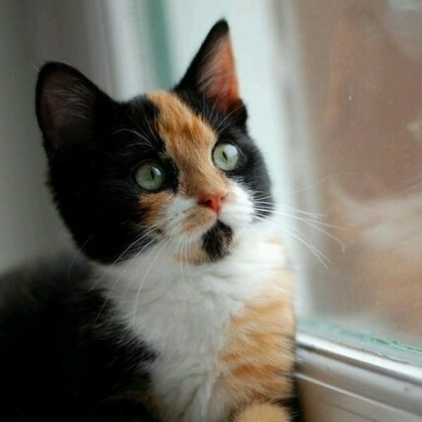 beautiful cats صور قطط جميلة (42)