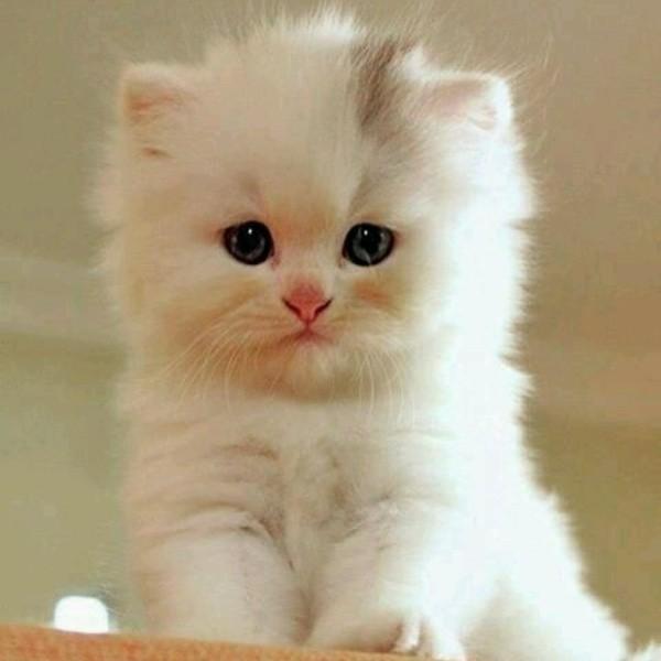 beautiful cats صور قطط جميلة (47)