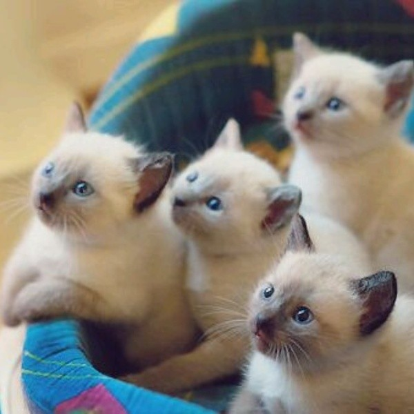 beautiful cats صور قطط جميلة (48)