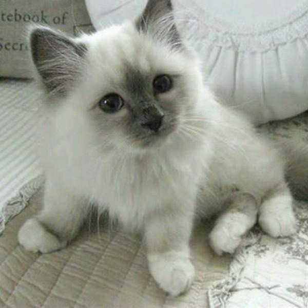 beautiful cats صور قطط جميلة (49)