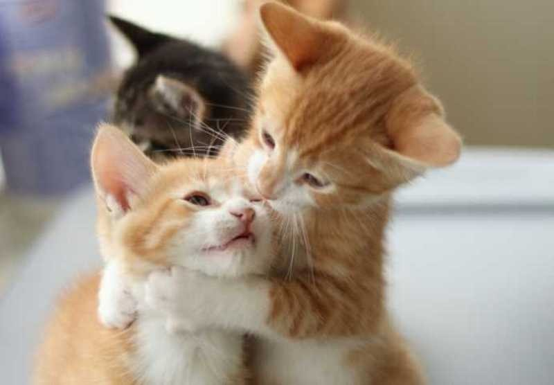 beautiful cats صور قطط جميلة (5)