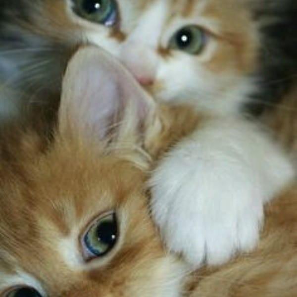 beautiful cats صور قطط جميلة (52)