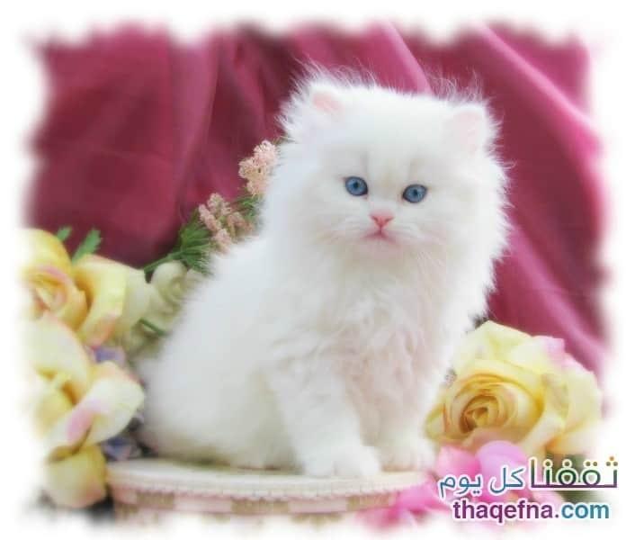 beautiful cats قطط جميلة
