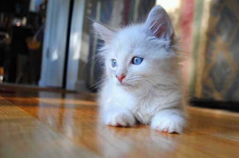 beautiful cats صور قطط جميلة (8)