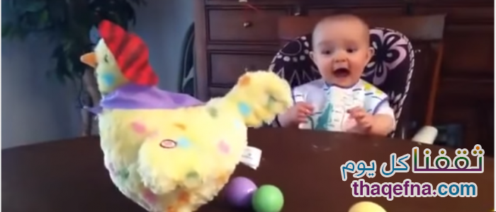 شاهدوا بالفيديو ردة فعل جميلة من طفل يرى الدجاجة وهي تبيض، مضحك جداً!!