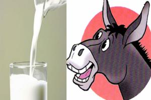 فوائد غير متوقعة لحليب الحمير، وجبنته هي الأغلى حول العالم، فهل تصدق هذا!