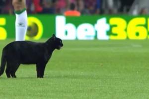 بالفيديو … أوقفوا مباراة برشلونه ومدريد بسبب قط أسود!!