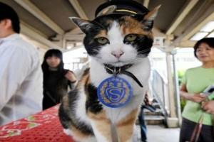 أفخر جنازة تمت الى القطة تاما الموظفة في محطة القطار!! فيديو