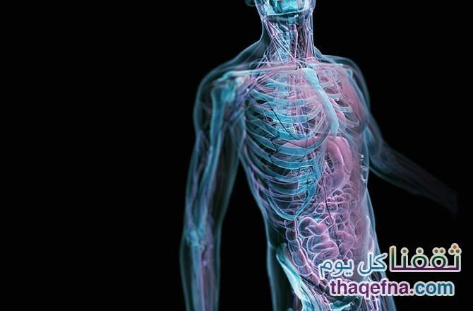 مفاهيم خاطئة عن جسم الإنسان لا يعرفها 90 % من سكان الكرة الأرضية