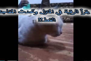 بالفيديو شيخ يقرأ القرآن على رجل مسحور ولكن كانت المفاجأة بما حدث مع القطة .. سبحان الله
