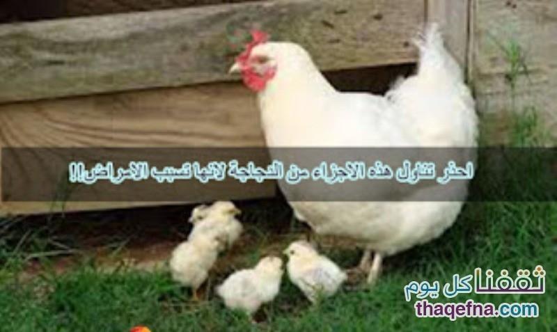 تحذير من بعض أجزاء من الدجاجة تسبب أمراض خطيرة عند تناولها بإستمرار