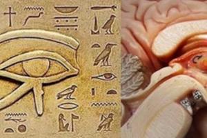 أكبر سر عن صحة الإنسان يخبئه هذا الجزء الصغير في الجسم والذي لا يعلمه الجميع . . العين الثالثة