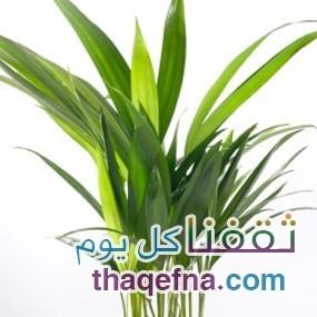 نباتات يمكن وضعها في غرف النوم