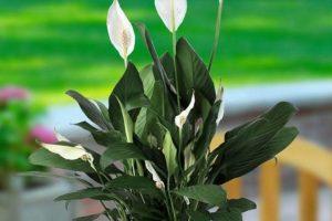 نباتات يمكن وضعها في غرف النوم للحصول على هواء نظيف . . . بعضها قد يفاجئك
