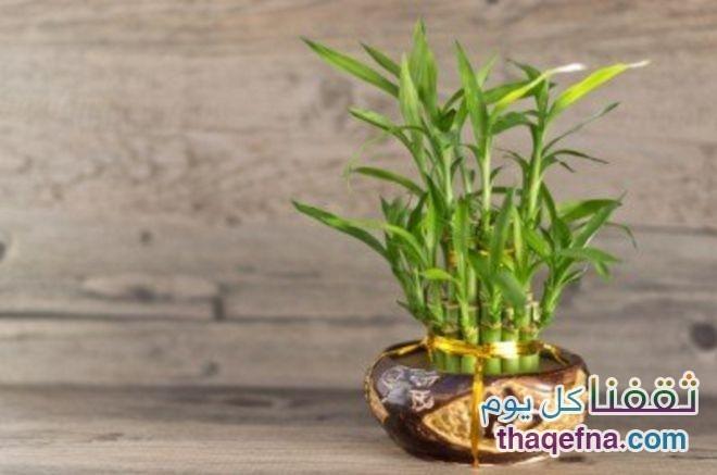 وضع-هذه-النباتات-في-غرفة-النوم-للحصول-علي-هواء-نظيف3