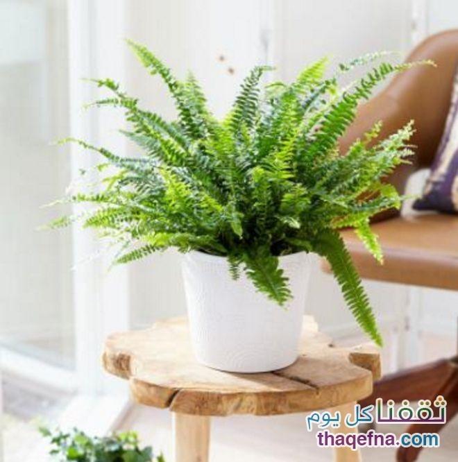 وضع-هذه-النباتات-في-غرفة-النوم-للحصول-علي-هواء-نظيف5