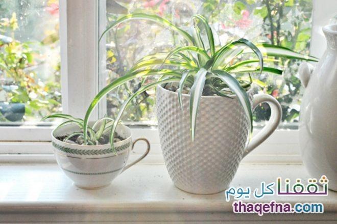 وضع-هذه-النباتات-في-غرفة-النوم-للحصول-علي-هواء-نظيف6