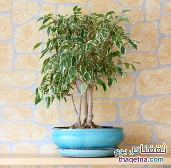 وضع-هذه-النباتات-في-غرفة-النوم-للحصول-علي-هواء-نظيف7