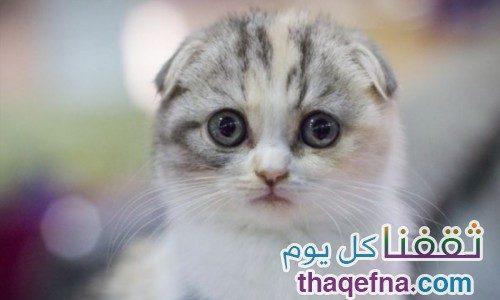 شاهدوا بالصور أغرب القطط التي يمكن أن تراها . . أيها أعجبك؟ صور لأجمل القطط