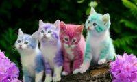 معجزة تحدث عند القطط حدثنا عنها رسولنا الكريم قبل 1400 عاماً ويثبتها العلماء هذه الأيام – سبحان الله