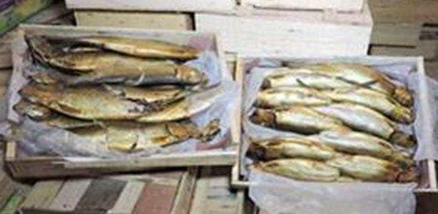 حملة تموينية في دمياط تضبط كمية تقدر بحوالي 914 كيلو أسماك وفسيخ منتهي  الصلاحية