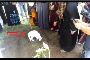 شاهدوا بالفيديو وفاء قطة لصاحبها بعد وفاته ورفضها مغادرة قبره ومحاولة نبشة وسط ذهول الحاضرين !